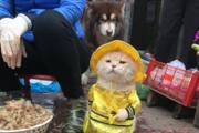 """""""생선 파는 고양이?"""", 소셜미디어 스타 된 고양이, 사실은…"""