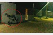 아르헨티나서 반인반수 '괴생물체' 포착… 흡혈 괴물 추파카브라?