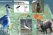 멸종위기 생물 38%가 DMZ에 산다
