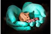 동성 쥐 사이에서 건강한 새끼 태어났다