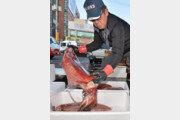 130cm 대형 한치 포항서 잡혀…죽도시장서 판매