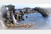 4.2m 산갈치·1.5m투라치·0.5m한치…동해안서 발견 심해어, 대지진 전조?