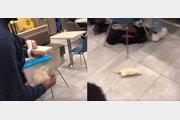 [영상]맥도날드 매장에 대형 쥐 '휙'…손님들 '혼비백산'