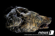 황소만 한 고대 늑대…시베리아 동토서 온전한 머리 발굴