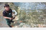 양어장 빅데이터 모아 질병 미리 예방… 건강한 제주 광어 비결