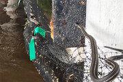 美 허리케인 지나간 곳에 악어-뱀 출몰
