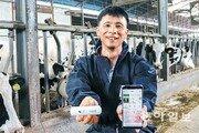 IoT로 젖소 키우니 우유 생산량 30%↑… 손정의도 반한 기술