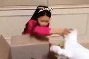 """아역배우 구사랑, 고양이 학대 논란…母 """"아이, 울면서 반성"""""""