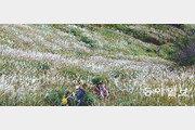 [김화성 전문기자의 &joy]포천 명성산 억새밭에서 노닐다