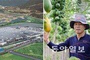 """""""금타가 郡民 동아줄""""… 폐열로 열대과일 재배도"""