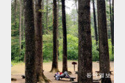 [갤럭시 S5로 찍는 포토에세이]무성한 나무숲