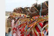 [홍진환 기자의 케냐에서 희망 찾기]<7>마사이족 여인들 전통 춤사위