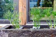 [오경아의 정원의 속삭임]멀지만 가까운 식물 파피루스