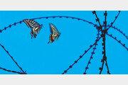 [손 내밀면 닿을 듯… DMZ]나비는 자유롭게 넘나드는데…