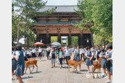 15m 거대 불상… 韓日 융합한 日 독자문화의 출발 상징