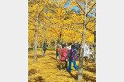 [농부 박인호의 전원생활 가이드]<44>전원생활 터, 단풍 떨어진 겨울에 보라