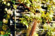 [오경아의 정원의 속삭임]식물을 공부할 때