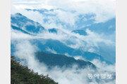 [손 내밀면 닿을 듯… DMZ]구름이 가려준 '60년의 긴장'