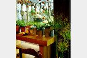 [오경아의 정원의 속삭임]'공기정화기' 관엽식물