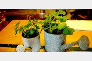 [오경아의 정원의 속삭임]누구나 할 수 있는 식물 복제 '꺾꽂이'