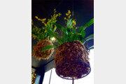 [오경아의 정원의 속삭임]겨울에 더 가까이 해야 할 식물