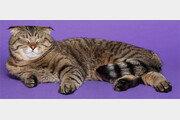 """[김지영 기자의 문학뜨락]작가들의 무한 애정 받는… """"나는 고양이로소이다"""""""