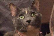 [히로미의 고양이 일기]<2>들고양이 비비와의 8년 동거