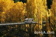 봄꽃 축제 대신 가을빛 물든 뉴질랜드로 단풍놀이 떠나볼까?