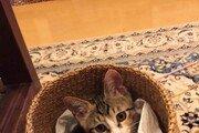 [히로미의 고양이 일기]<3>봄에 만난 하루