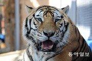 중국에 '백두산 호랑이 국가공원' 생긴다…서울 면적 25배 크기