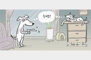 [안영배 전문기자의 풍수와 삶]개와 고양이의 식스센스