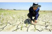 변기물 절수, 빗물 저장, 웅덩이…'티끌 물' 모아 '큰 가뭄' 잡는다