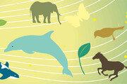 [김재호의 과학 에세이]밍크고래의 죽음과 소리 생태계의 파괴