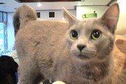 [히로미의 고양이 일기] <11>고양이가 사랑받는 이유