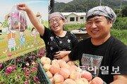 복숭아 생즙으로 이룬 '무릉도원'