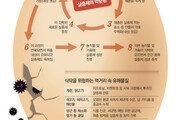 내성 생긴 해충 → 더 강한 살충제 '악순환'… 위협받는 식탁 안전