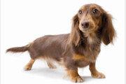 [책의 향기]독일서 개 키우려면 자격증 필요하다고?