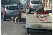 [영상] 차에 개 두 마리 묶어 달린 견주, 해명 후 더 큰 비난…왜?