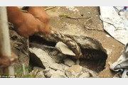 콘크리트 바닥 틈에서 뭔가 꿈틀… 몸길이 4m 왕뱀, 실화냐?