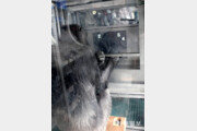 日 침팬지, 숫자 기억서 인간에 완승