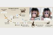 인간과 가장 가까운 원숭이 복제했다