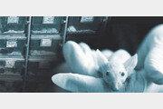 [김재호의 과학 에세이]내 어릴 적 생쥐에게 보내는 레퀴엠