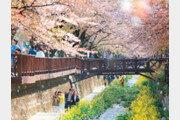 봄바람 불어오며… '경남 봄축제' 활짝 피운다