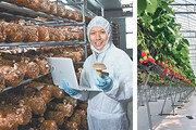 농축산물 재배-유통에 ICT 접목… 유통업계, '스마트팜 제품' 열풍