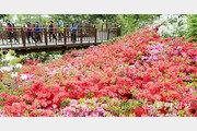 봄빛 머금은 순천만 철쭉공원