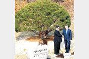 [횡설수설/이기홍]1953년생 소나무와 동갑내기들