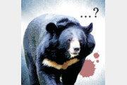 [횡설수설/이광표]지리산 반달곰과 도심 멧돼지