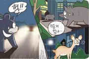 [신문과 놀자!/주니어를 위한 칼럼 따라잡기]지리산 반달곰과 도심 멧돼지