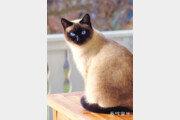[책의 향기]폐허가 된 인간 세상… 고양이가 전하는 생존법은