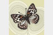 [날씨 이야기]나비와 앙상블